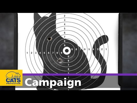 When Innocent Cats Are The Target - Cats Protection Campaign