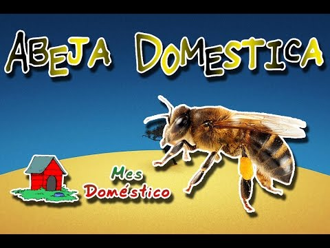 Honey bee | The producers of nature | (Animal World) | domestic Month |