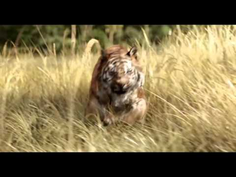 The Jungle Book - Trailer A - Lotte Cinema