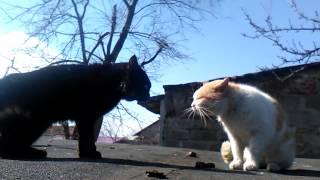 Marcowe miauczenie kotów niepodobne do płaczu dzieci