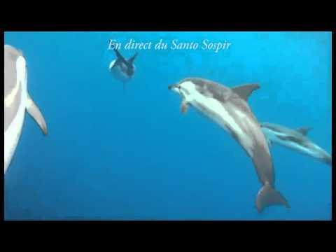 Les dauphins bleu et blanc à létrave du Santo Sospir ...