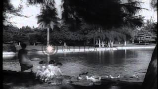 Views Of Bridge, Children At Pond And Garden, Hotel Nacional De Cuba, Local Marke...hd Stock Footage