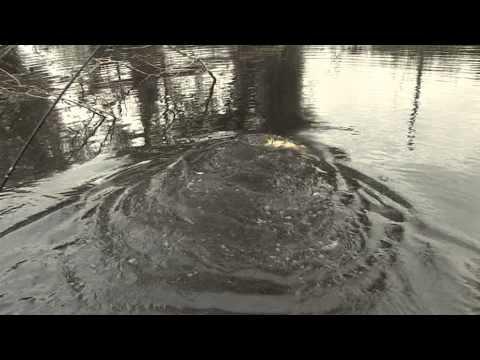 A Pesca in Friuli Venezia Giulia - Trailer 02