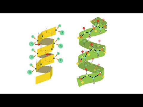 Animación Estructura De Las Proteínas Youtube