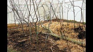 High Density Dwarf Apple Tree Planting-- DWN Style
