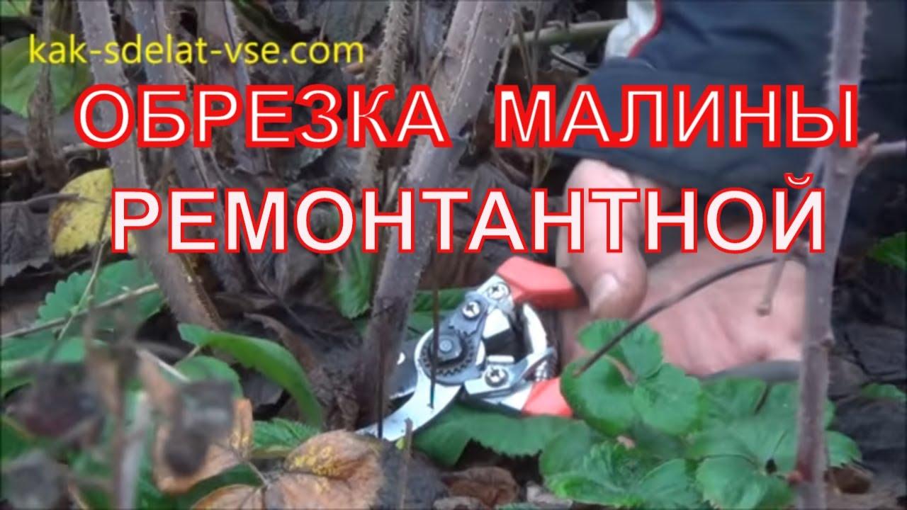 правильная обрезка малины осенью видео