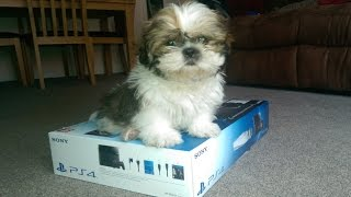 Playstation 4 Unboxing Featuring Worlds Cutest Dog - DPJ Buys A PS4! :O