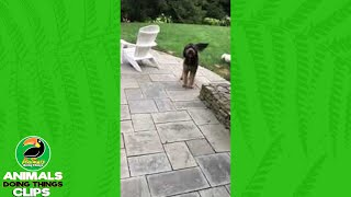 Happy Dog Runs Over to Stairs   Animals Doing Things