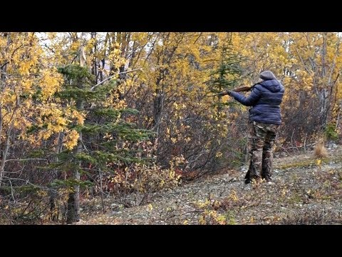 Alaska Life ~ GROUSE hunting from FIELD to TABLE.