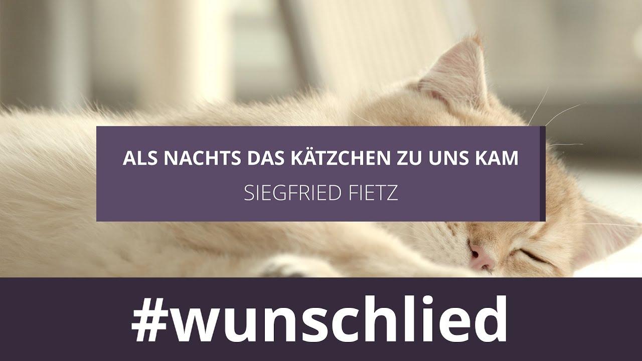 Siegfried Fietz singt 'Als Nachts das Kätzchen zu uns kam' #wunschlied