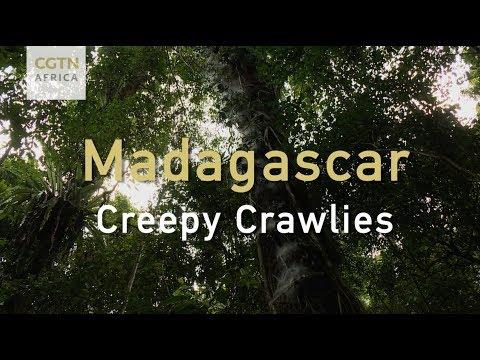 Madagascar: Creepy Crawlies