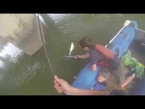 Fishing for striped bass in San francisco bay: Corte madera creek 3/8/14
