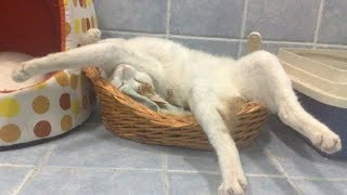 TIME to LAUGH out loud! - Funny CAT compilation