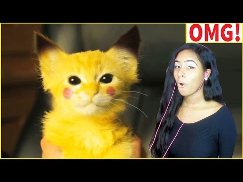 Cute Cats And Funny Kittens Videos Compilation 2016 - CAT compilation