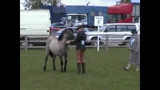 Highland Ponies at Newark 13 May 2012 001.mp4