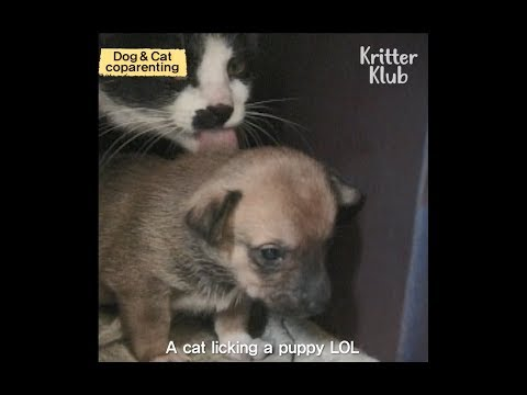 Dog And Cat Parent Their Puppies And Kittens Together | Kritter Klub
