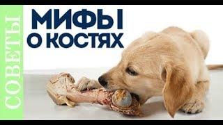 К чему приводит кормление костями. Мифы о костях. Розыгрыш.