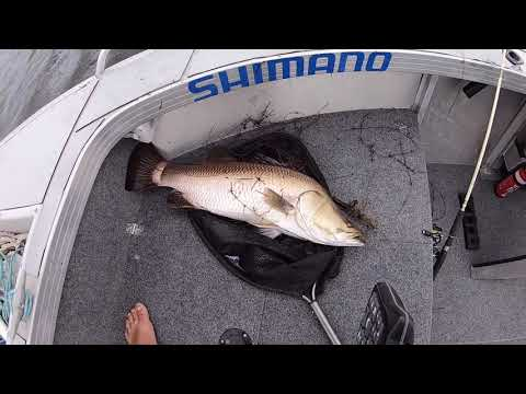 Barramundi On Topwater Frogs - Mackay Kinchant Dam