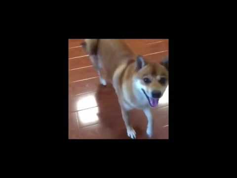 Funny dog dancing complication #2