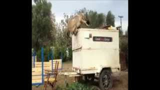 Greekdogscenter Dog Training Kangal