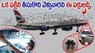 ఒక్క పక్షిని కిడ్నాప్ చేసారని ఈ పక్షులన్నీ ఏమ్చేసాయో తెల్సా  Birds chasing Aeroplane in Sky  Sumantv