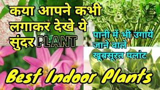 पानी में उगायें जानें वाले पलांट,Best Indoor Plants,tips to grow plant in water,anvesha,s creativity
