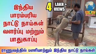 Kanni   இந்தியாவின் பாரம்பரிய நாட்டு நாய்கள் வளர்ப்பு   Indian Dog Breed Lover
