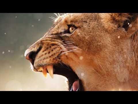 History of Punjabi Language Veer Prabhdeep Singh Tiger Jatha U.K ੳ ਅ ੲ ਸ ਹ   ਿ  ਾਂ  ੧ ੨ ੩ ੪ ੫ ੬ ੭ ੮