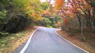 九重 県道40号 走行シーン