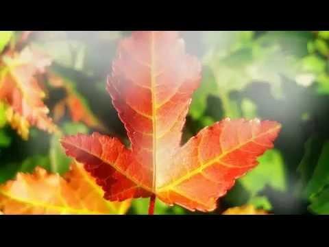 Видео, клипы, ролики смотреть онлайн «Ласковый Май»