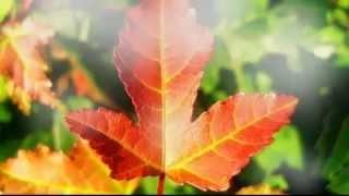 Дождь (Осенний Парк ) - Ласковый Май