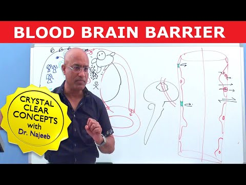 Blood Brain Barrier - Structure & Function