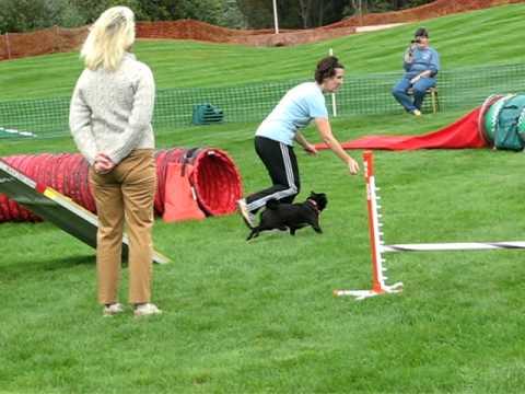 2011 Pug Dog Club of America Agility Trials, Expert