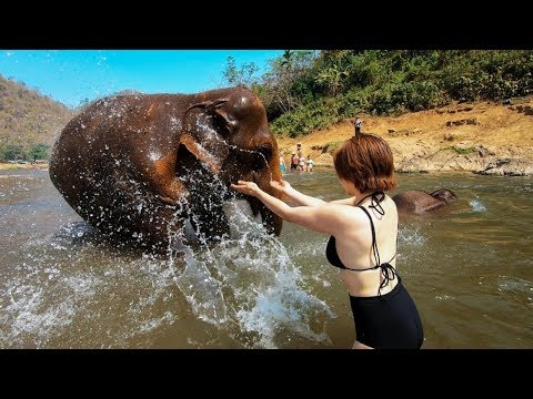The ONLY elephant experience you should have in Thailand