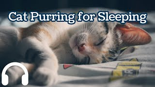 Cat Purr for Relaxing: 320kbps Loud and Clear Sound for 2 Hours.