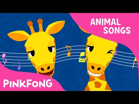 Che Che Koolay Giraffe | Giraffe | Animal Songs | Pinkfong Songs for Children