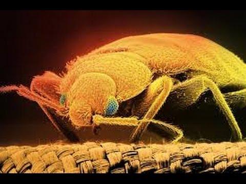 Schädlinge & Schadstoffe in unseren Schlafzimmern, haltet euch fest !!!
