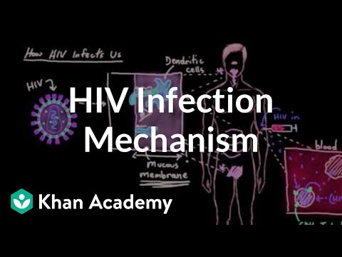 How HIV infects us: Mucous membranes, dendritic cells, and lymph nodes | Khan Academy