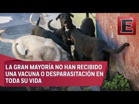 México es el país de América Latina con mayor número de perros callejeros