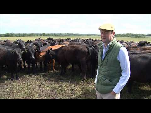 Cotswold Seeds First Hand: Ralph Messenger Herbal Leys for Beef Cattle