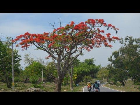 Full Bike Ride Through Bandipur Tiger Reserve   Bandipur National Park, Karnataka