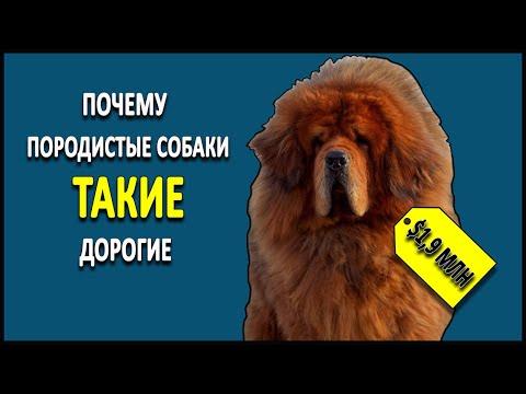 Вопрос: Какие породы собак слишком привязаны к своим хозяевам?
