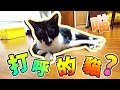 【Moco貓咪日常】打呼的貓咪? 不要再睡了