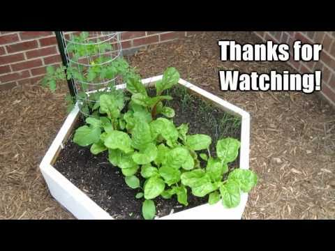 Garden Update #2 - May 3rd 2011 - Raised Bed Vegetables Square Foot Gardening
