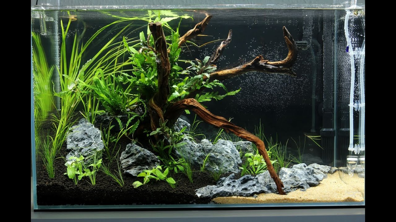 Aquascape ADA Cube Garden 60p - a little piece of mekong - Day 1 ...