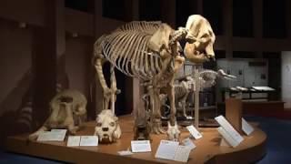麻布大学 いのちの博物館