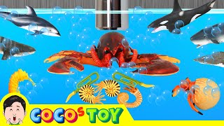 A Robster lives under the wash basin 9, sharks and whales name, ㅣreal versionㅣCoCosToy