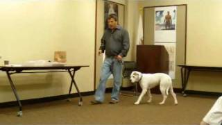 Dog Training Tips, Alex Brooks, La Grange Il Public Library