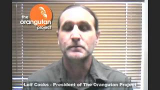 Orangutan Odysseys Leif Cocks Tours