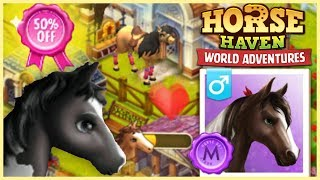 50% Off Sale + Getting an American SaddlebredHorse Haven World Adventures